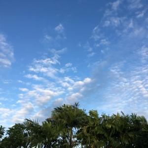 タイの観光シーズン一考。11月から2月前半がよいと思う。雨、晴天日実績からの推薦。