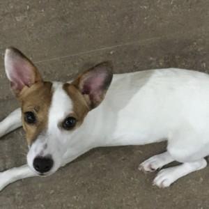 タイで新たに愛犬ジュディを育てる、新しい家族の紹介。