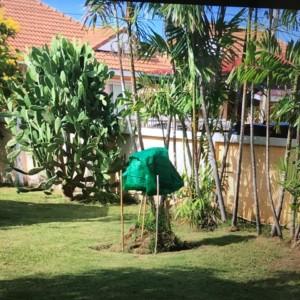 タイでコーヒーの木を育てて、自家製コーヒー作りを目指す(第二報)失敗談。